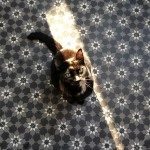 Fußbodenheizung Zementfliesen